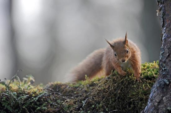 red-squirrel-taken-on.jpg